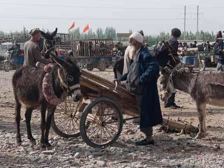 A Uighur man and his donkeys