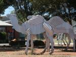 Norseman Tin Camels